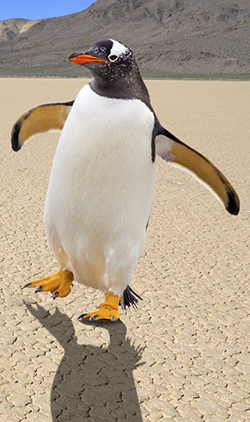 Microsite-temperature-penguin-bottom-hompage-image